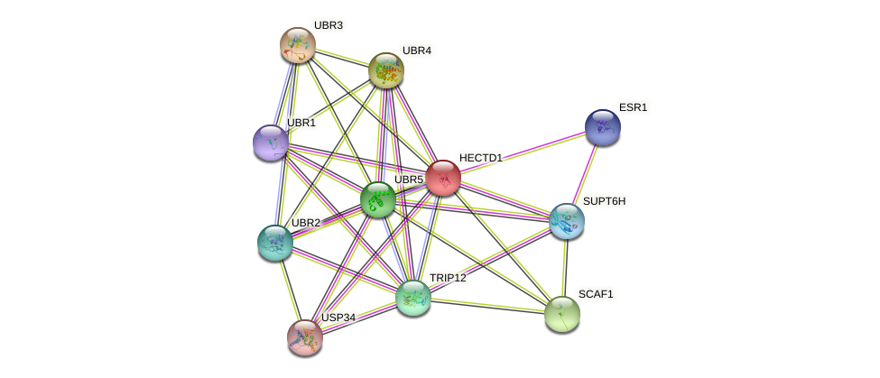 HECTD1 protein (human) - STRING interaction network