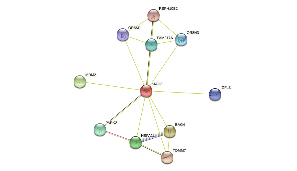 SIAH3 protein (human) - STRING interaction network