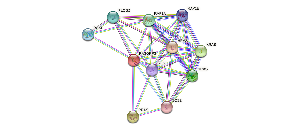RASGRP3 protein (human) - STRING interaction network