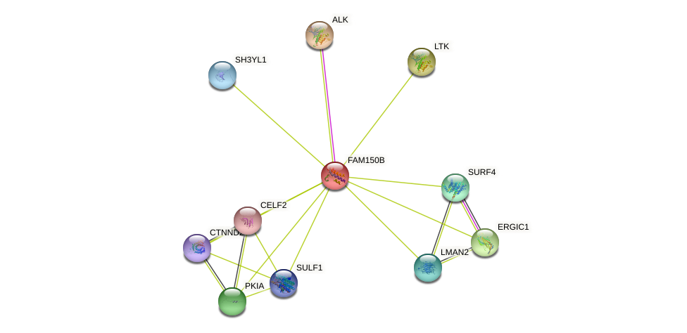 FAM150B protein (human) - STRING interaction network