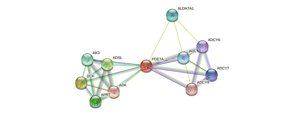 PDE7A protein (human) - STRING interaction network