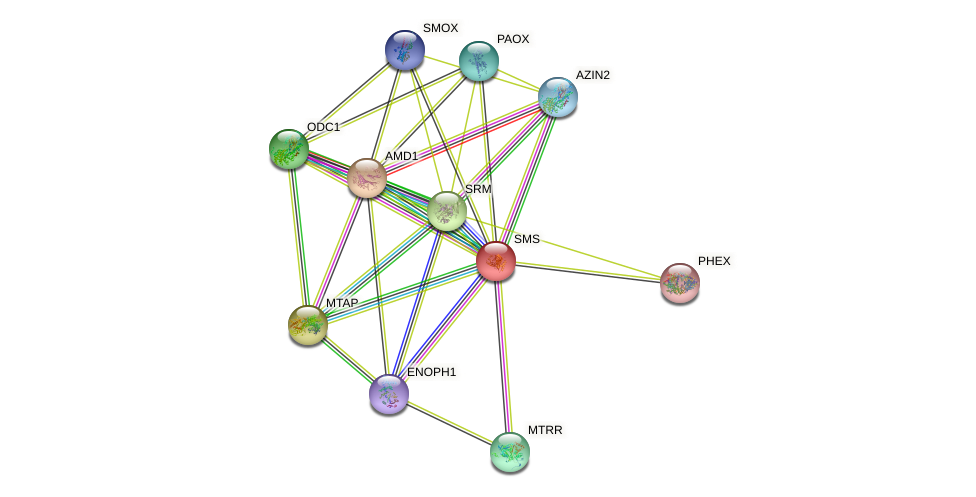 SMS protein (human) - STRING interaction network
