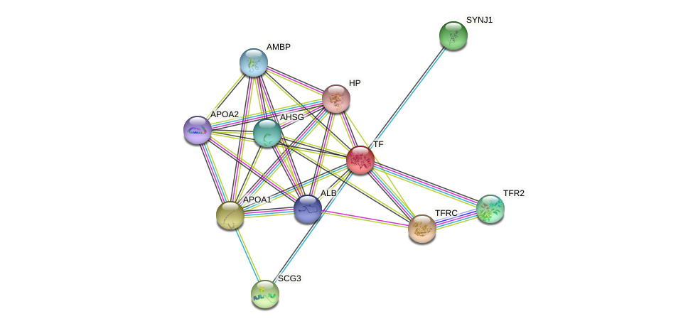 TF protein (human) - STRING interaction network