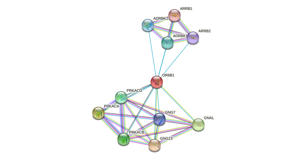OR6B1 protein (human) - STRING interaction network