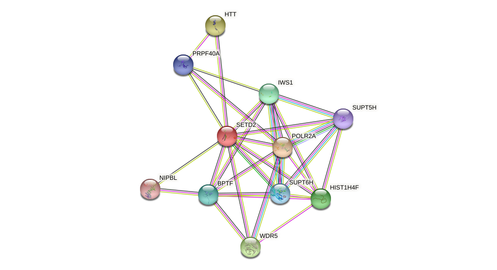 SETD2 protein (human) - STRING interaction network