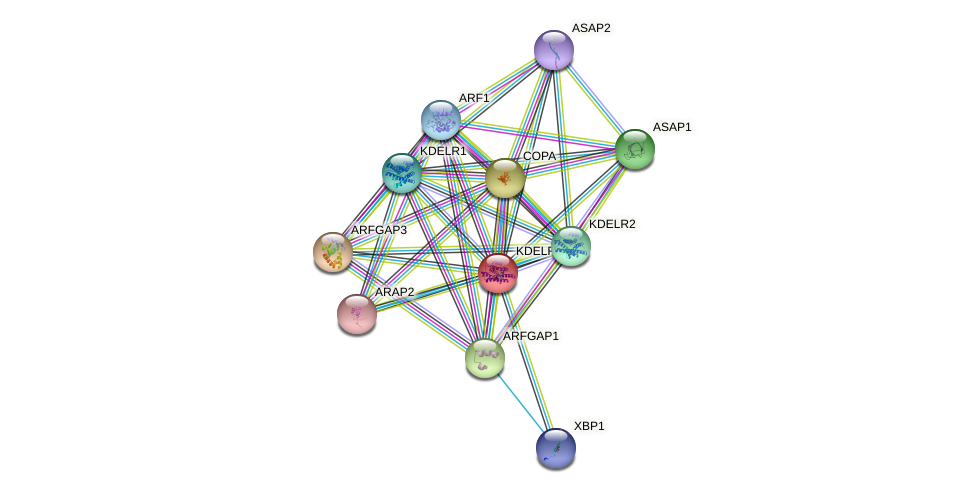 KDELR3 protein (human) - STRING interaction network