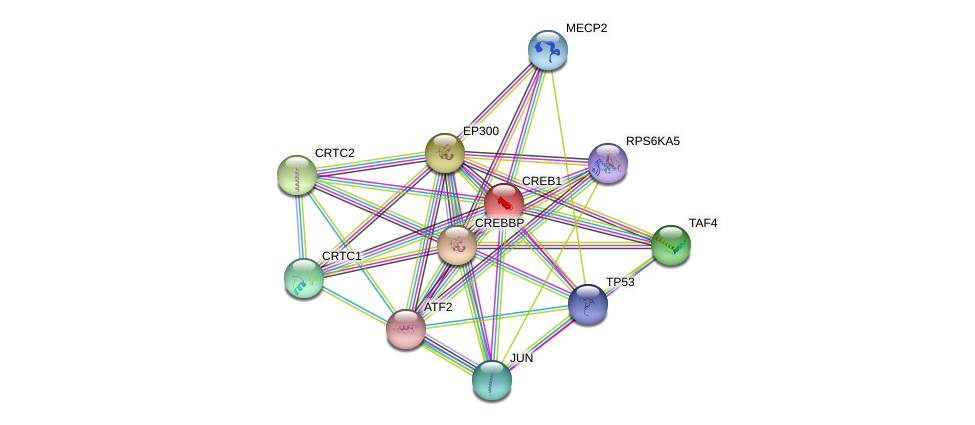 CREB1 protein (human) - STRING interaction network
