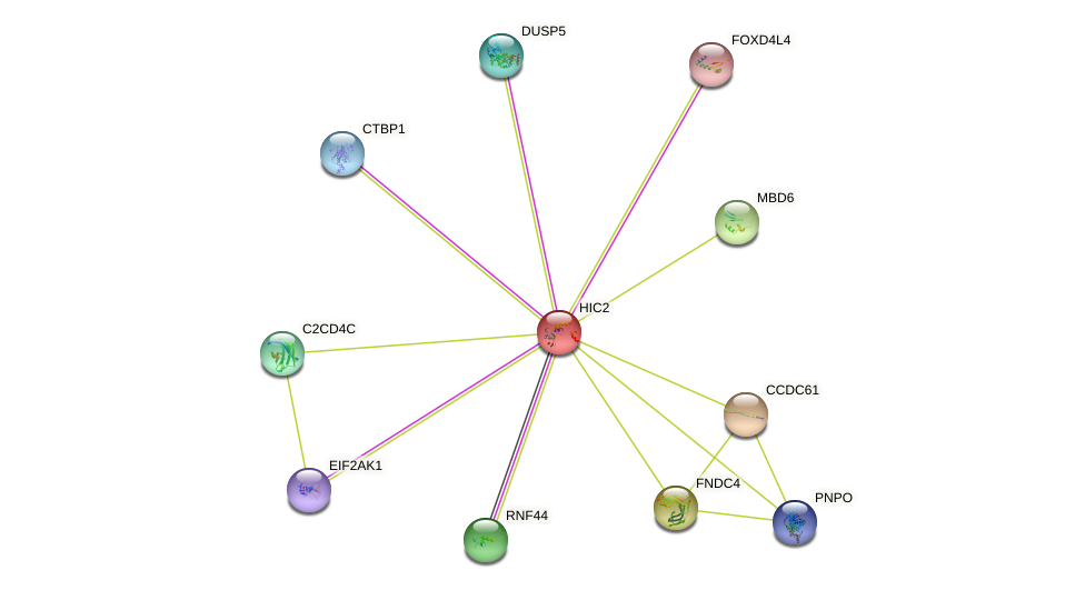 HIC2 protein (human) - STRING interaction network