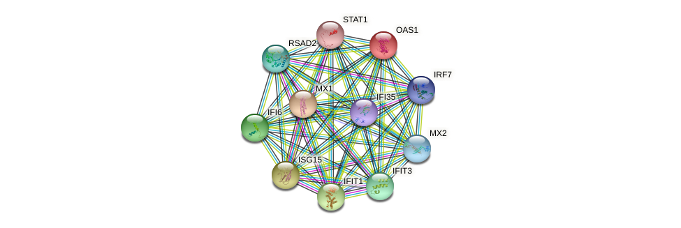 OAS1 protein (human) - STRING interaction network