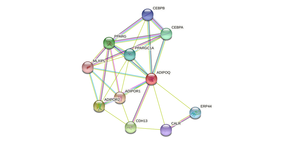 ADIPOQ protein (human) - STRING interaction network
