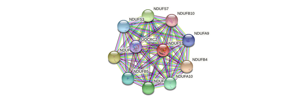 NDUFS1 protein (human) - STRING interaction network