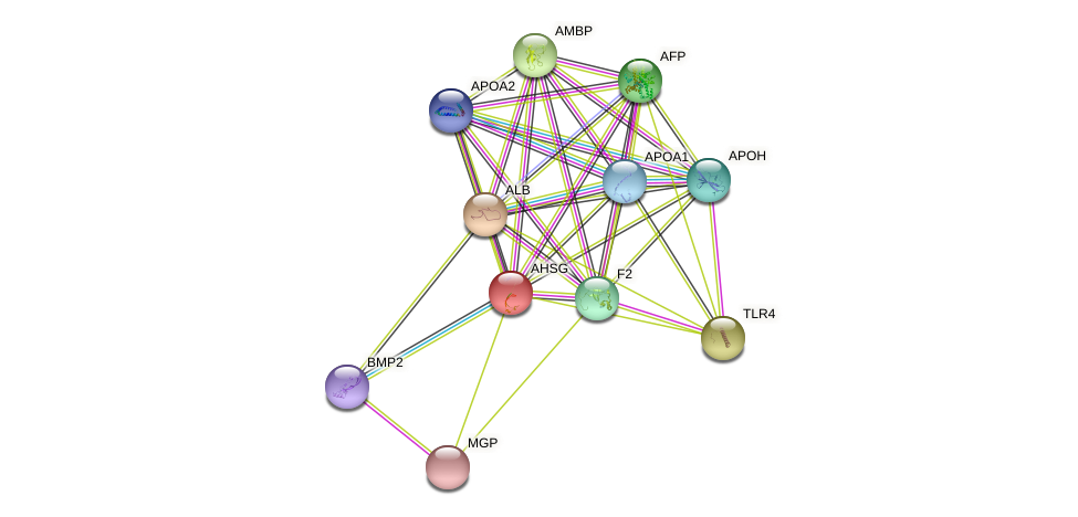 AHSG protein (human) - STRING interaction network