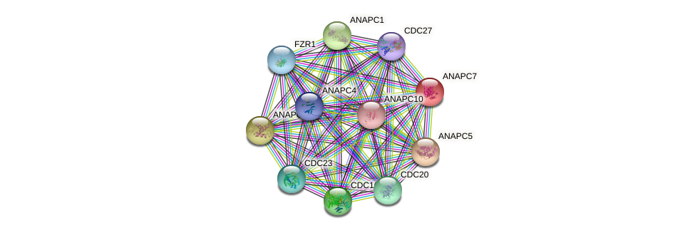 ANAPC7 protein (human) - STRING interaction network