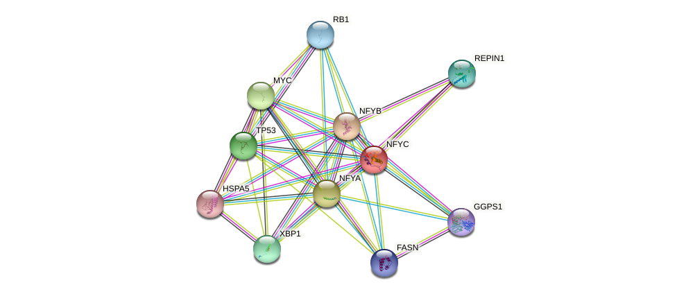 NFYC protein (human) - STRING interaction network