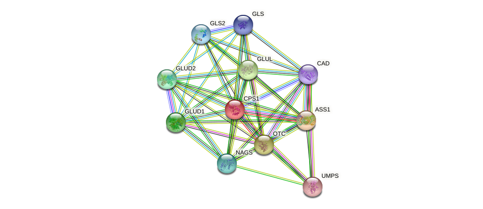 CPS1 protein (human) - STRING interaction network
