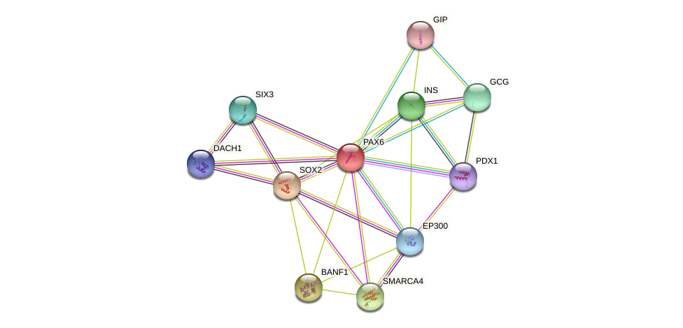 PAX6 protein (human) - STRING interaction network