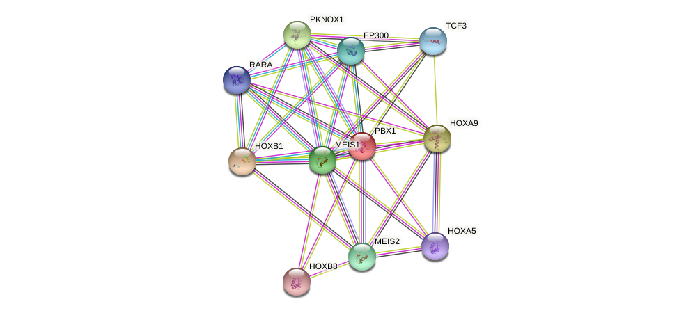 PBX1 protein (human) - STRING interaction network