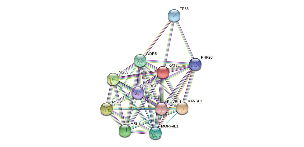 KAT8 protein (human) - STRING interaction network