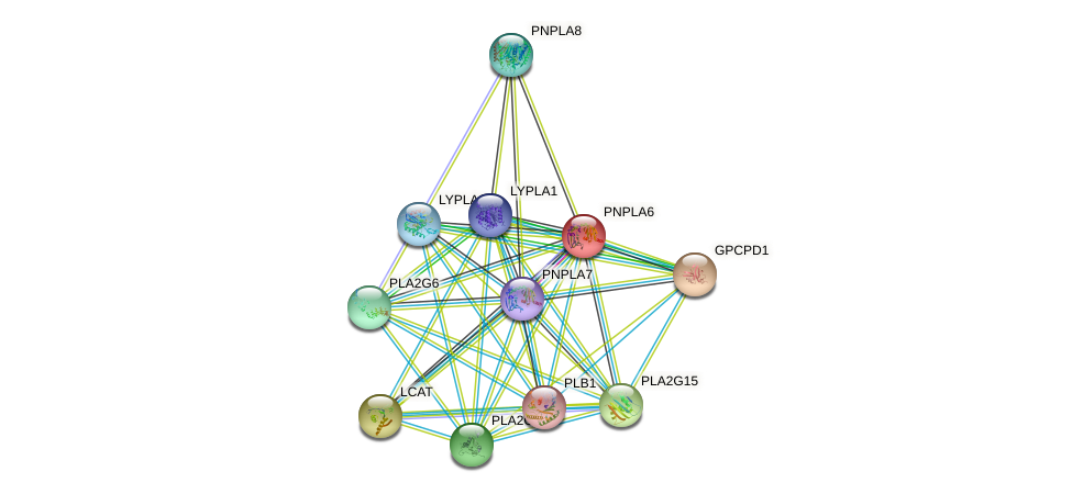 PNPLA6 protein (human) - STRING interaction network