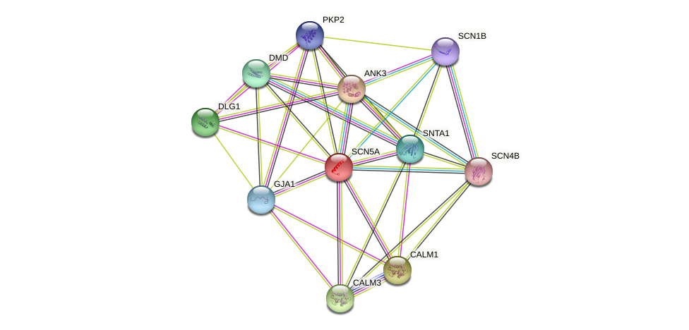 SCN5A protein (human) - STRING interaction network