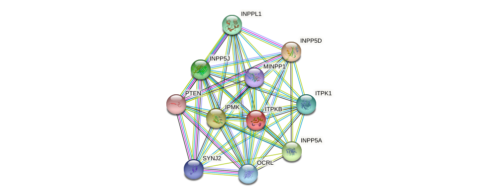 ITPKB protein (human) - STRING interaction network