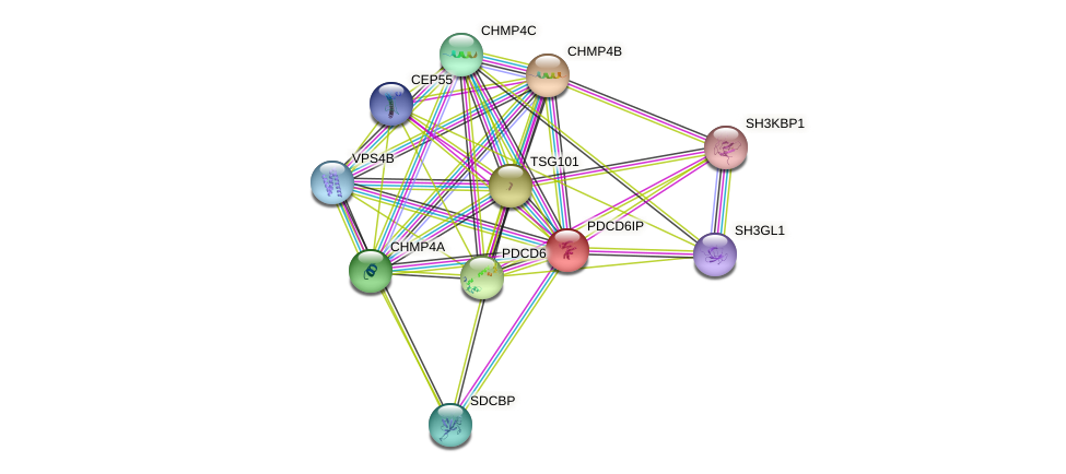 PDCD6IP protein (human) - STRING interaction network