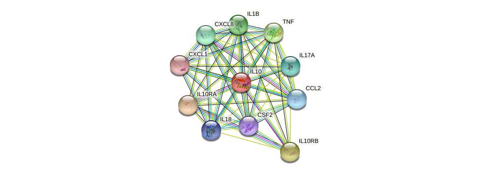 IL10 protein (human) - STRING interaction network
