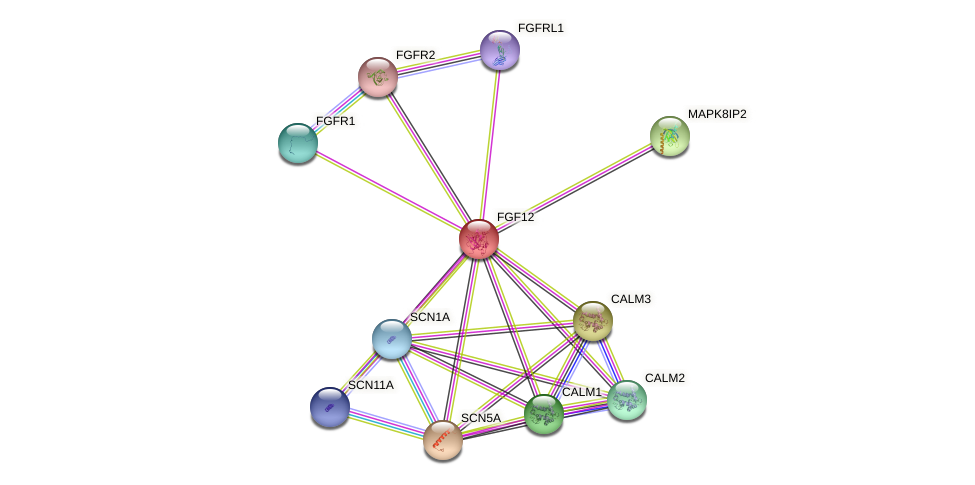 FGF12 protein (human) - STRING interaction network
