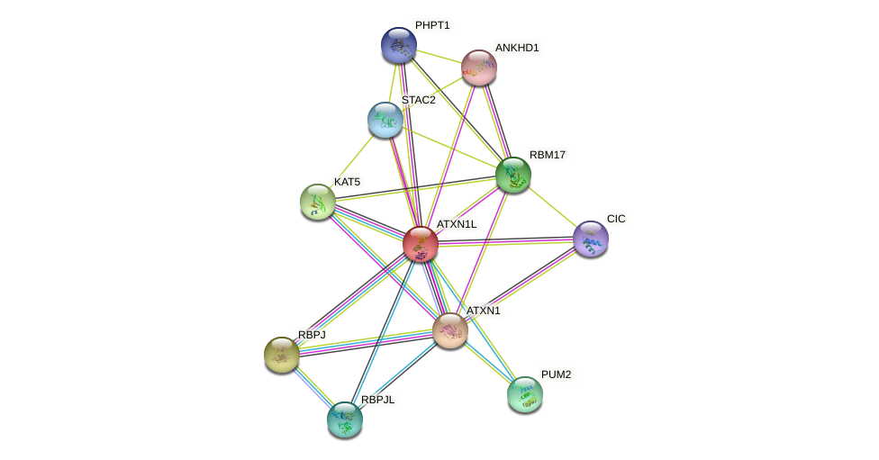 ATXN1L protein (human) - STRING interaction network