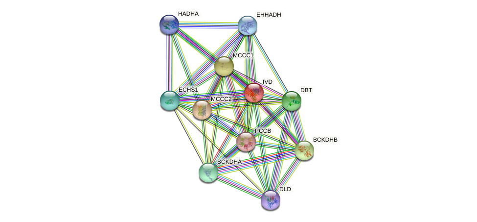 IVD protein (human) - STRING interaction network