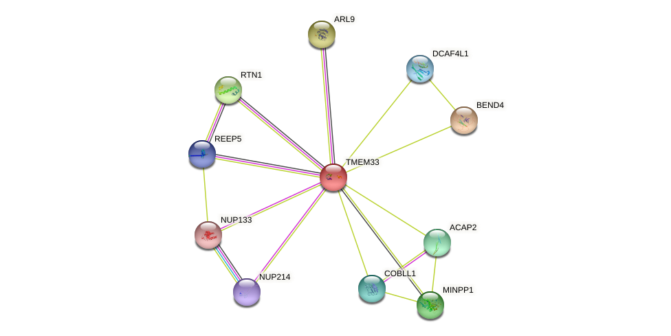 TMEM33 protein (human) - STRING interaction network