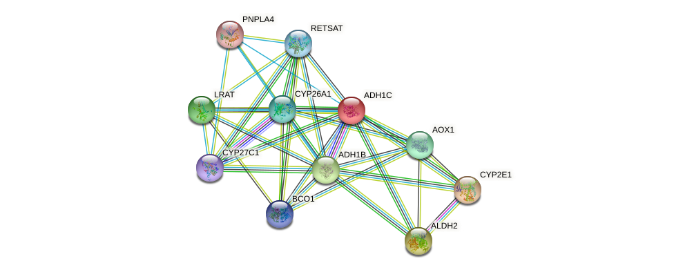 ADH1C protein (human) - STRING interaction network