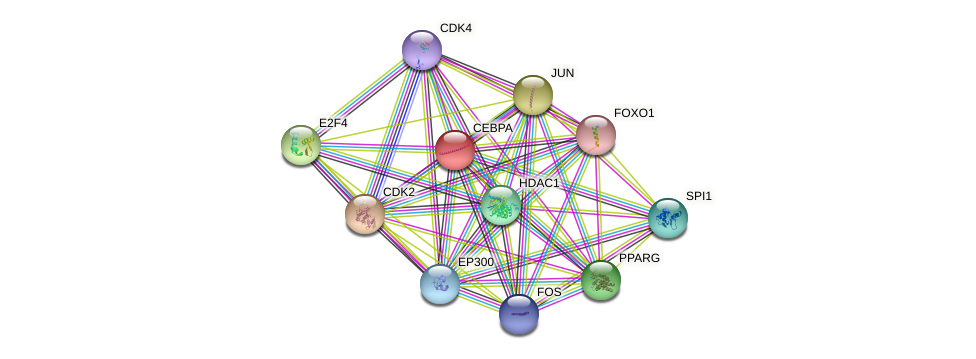 CEBPA protein (human) - STRING interaction network