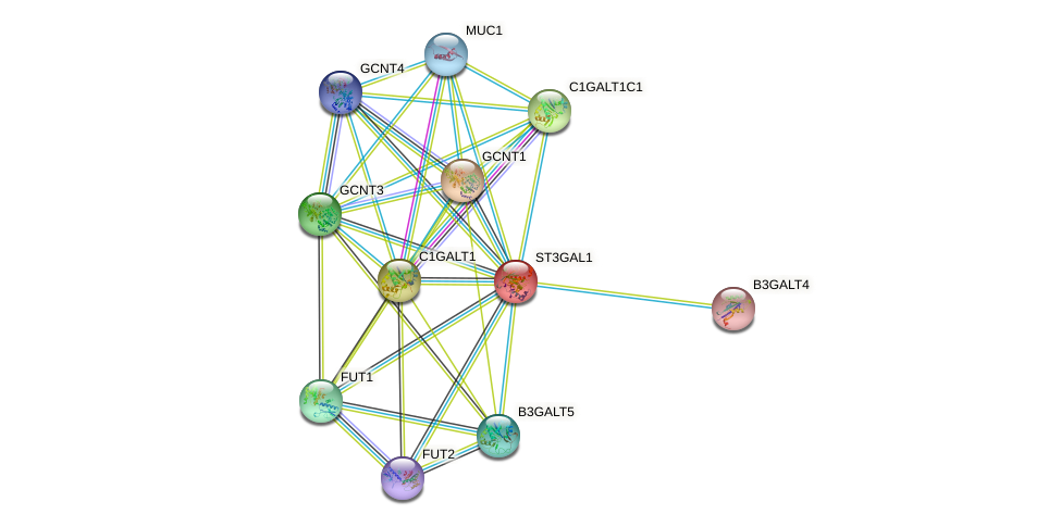 ST3GAL1 protein (human) - STRING interaction network