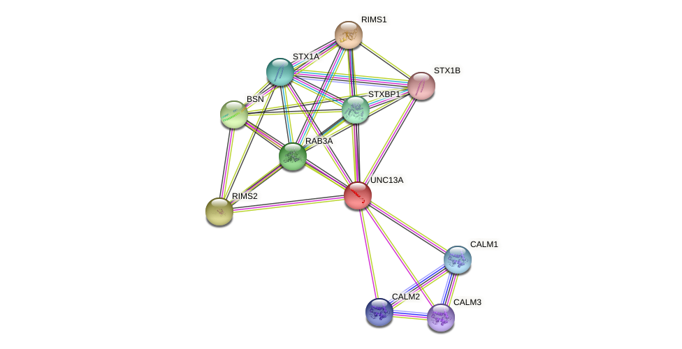 UNC13A protein (human) - STRING interaction network