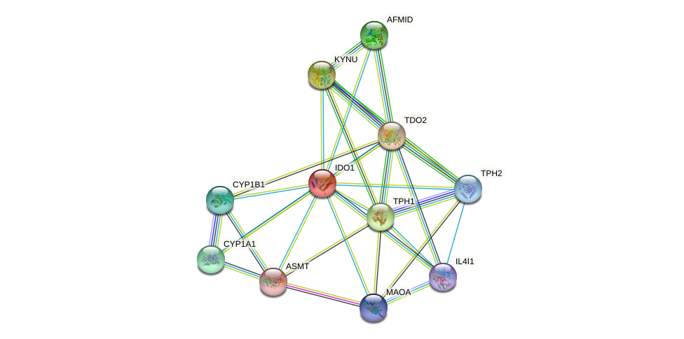 IDO1 protein (human) - STRING interaction network