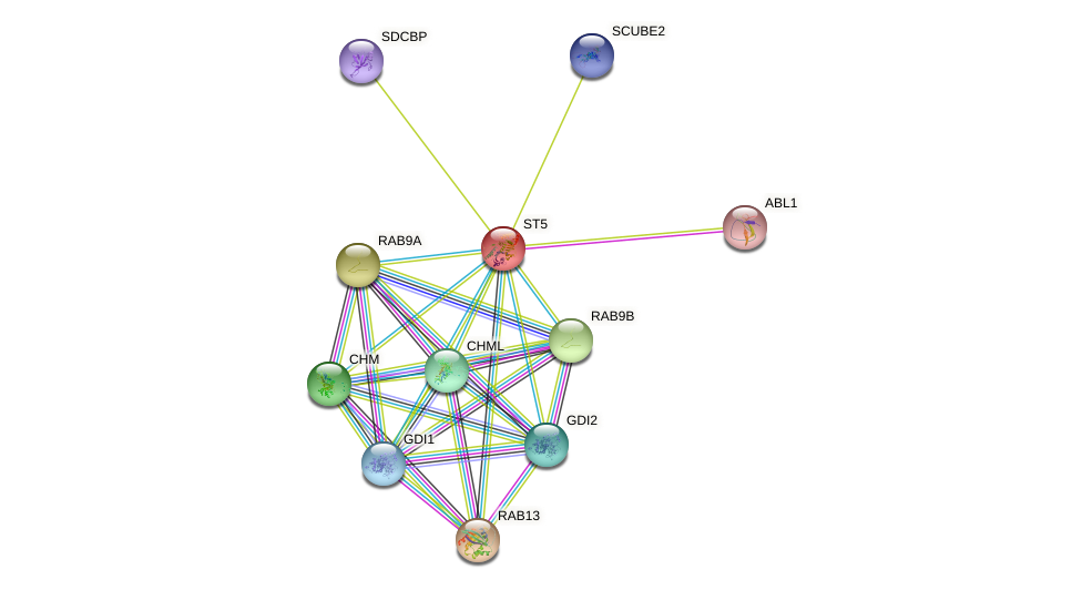 ST5 protein (human) - STRING interaction network