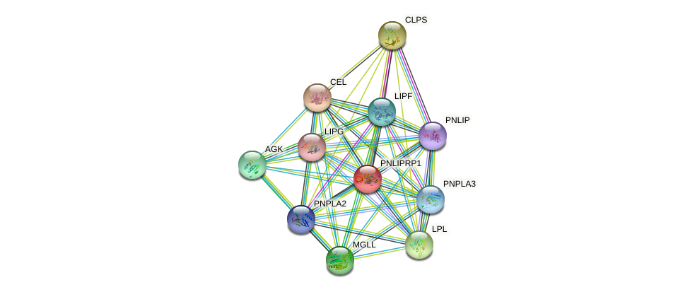PNLIPRP1 protein (human) - STRING interaction network