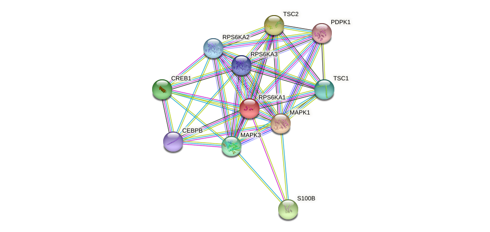 RPS6KA1 protein (human) - STRING interaction network