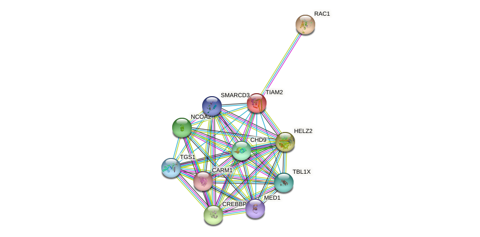 TIAM2 protein (human) - STRING interaction network