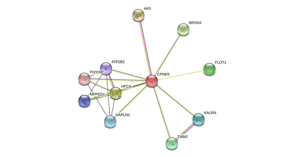 CPNE6 protein (human) - STRING interaction network