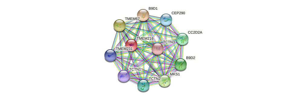 TMEM216 protein (human) - STRING interaction network