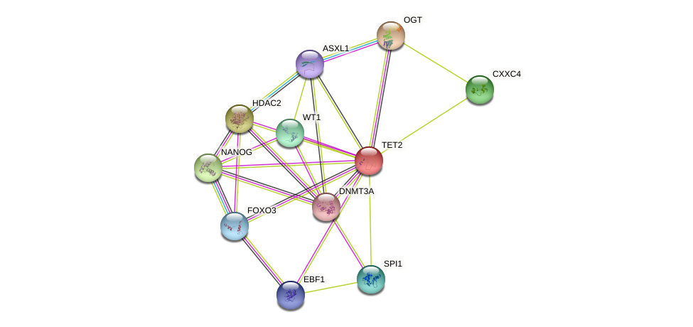 TET2 protein (human) - STRING interaction network