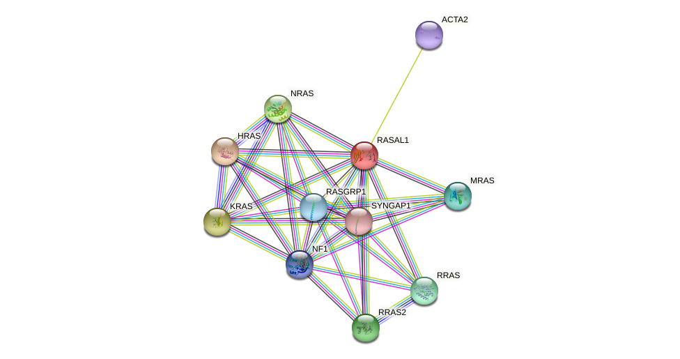 RASAL1 protein (human) - STRING interaction network