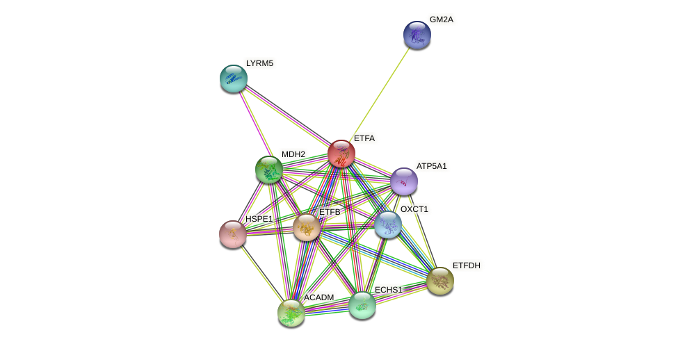 ETFA protein (human) - STRING interaction network