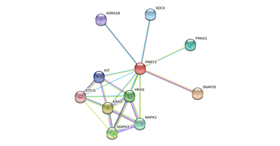 PRRT2 protein (human) - STRING interaction network
