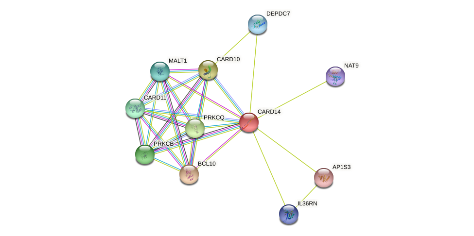 CARD14 protein (human) - STRING interaction network