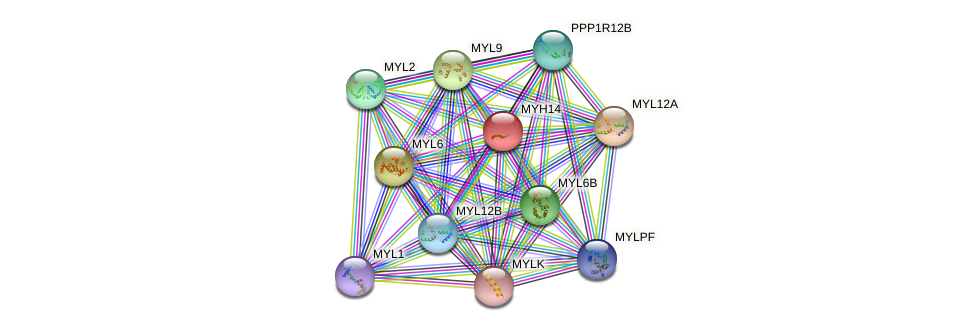 MYH14 protein (human) - STRING interaction network