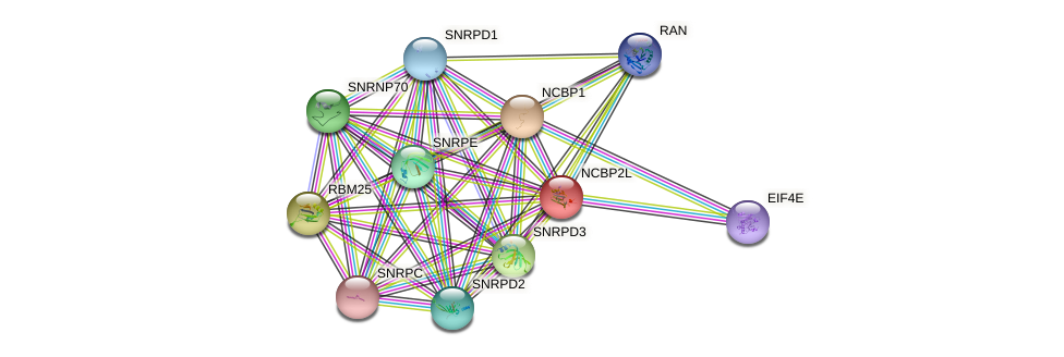 NCBP2L protein (human) - STRING interaction network