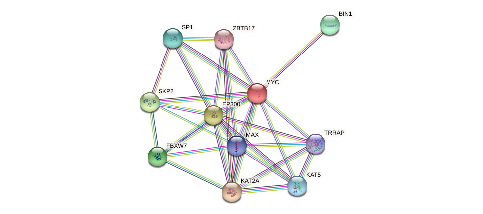 MYC protein (human) - STRING interaction network